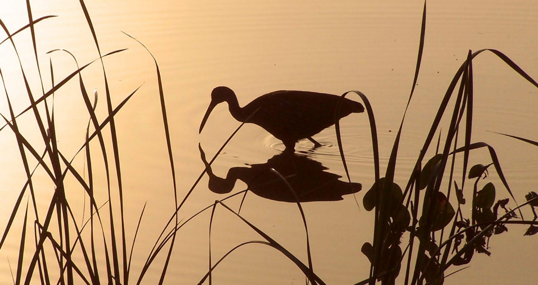 Oklawaha Valley Audubon Society